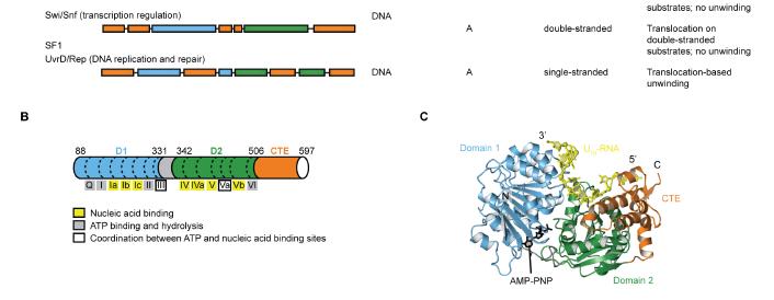 结构分析及蛋白质网络互作分析;上机实践.